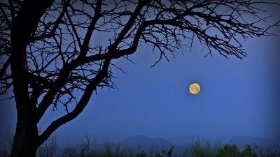 Super-moon-12809-2011-03-20-blog